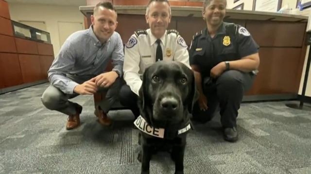 Support dog provides comfort to Capitol Police